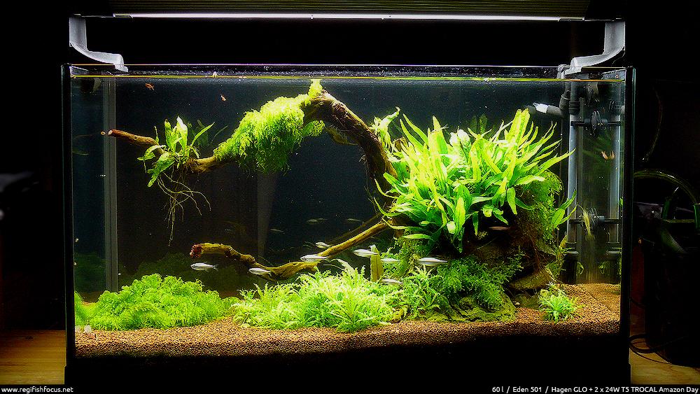 60 litres aquascape avril 2012 life root regi fish for Aquarium ouvert